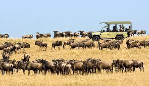 safari-tours
